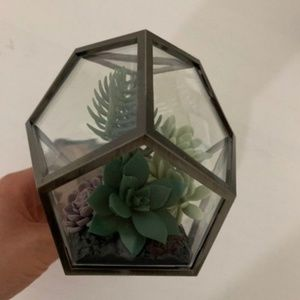 BBW Terrarium Succulent Wallflower New